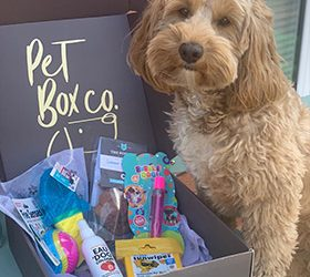 Pet Box Co – Summer Box