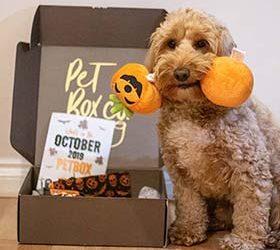 Pet Box Co – October Box