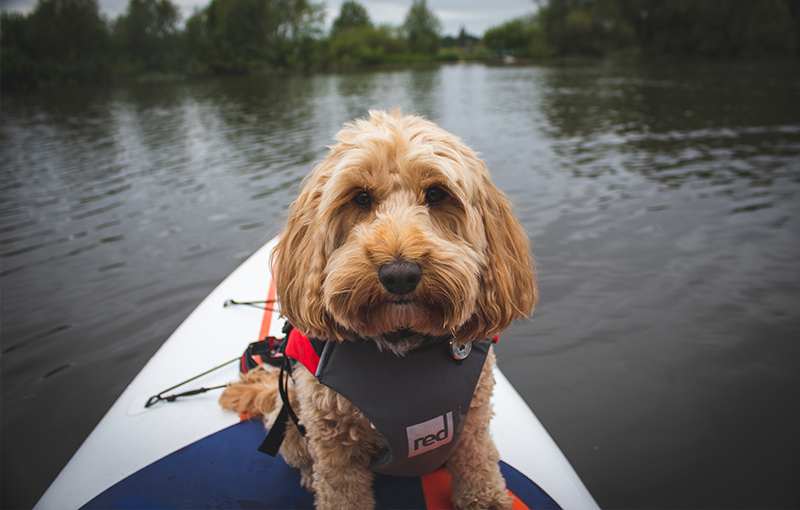 Reggie on paddle board