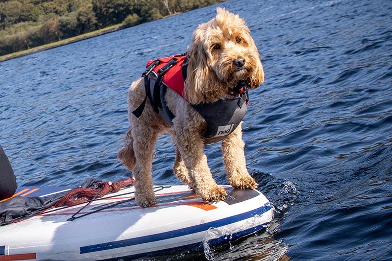 Red Dog Buoyancy Aid